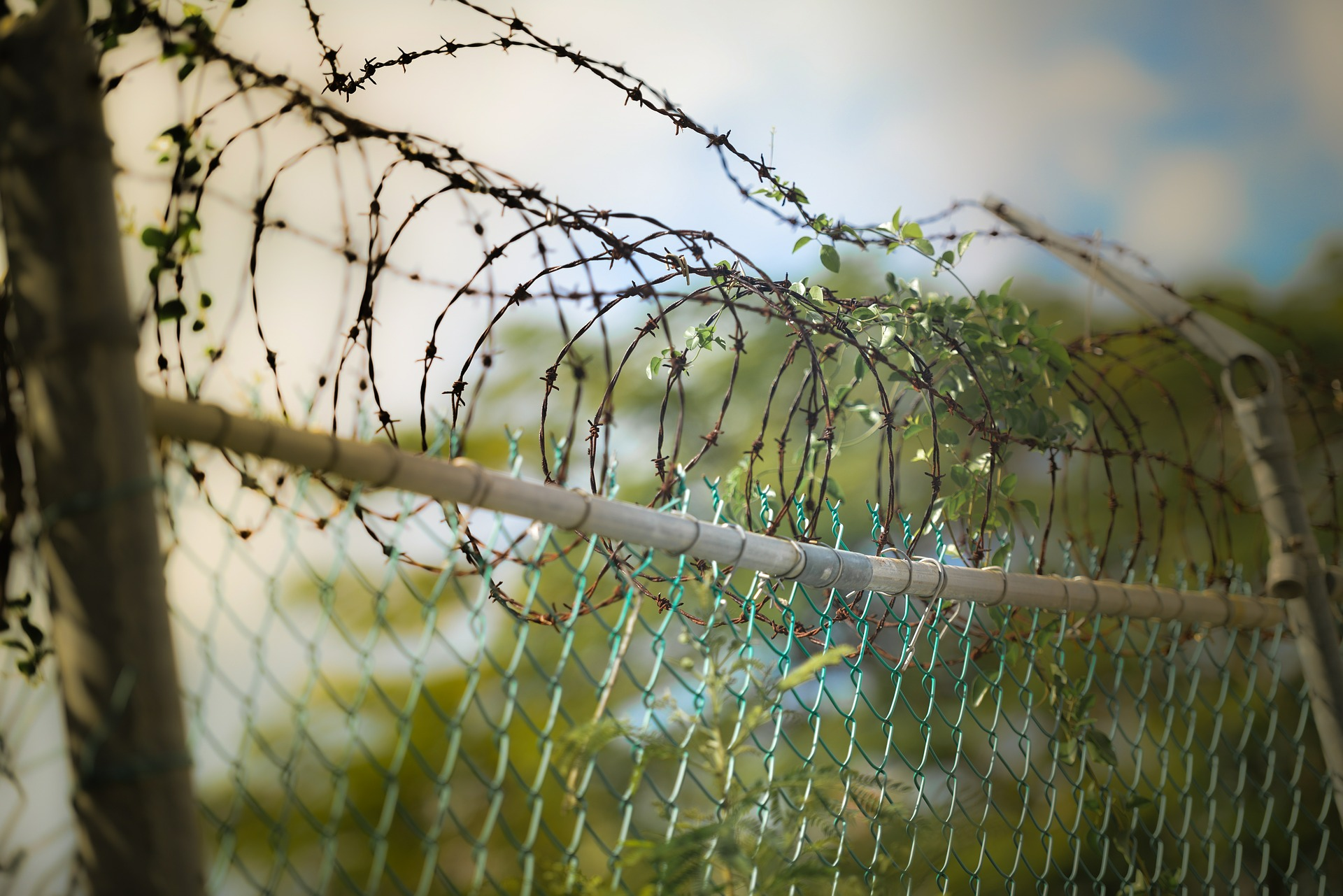 barbed-wire-600471_1920