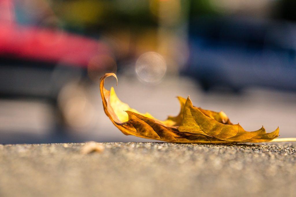 leaf-1082118_1280