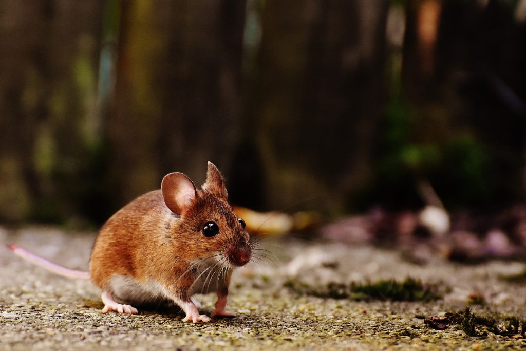 a mouse was a problem for one reader who was renting