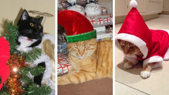 These 12 Cats Of Christmas All Stand For A Human Right - But Which Is Which?
